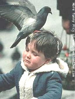 A pigeon removing waste on an unfortunate individual's cranium.